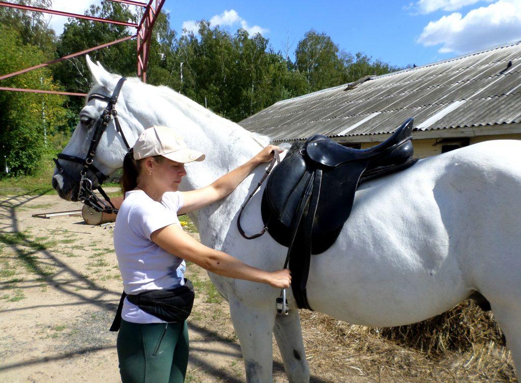 Как сесть на лошадь