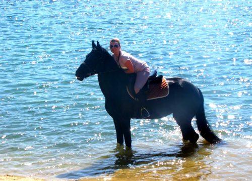 прогулки на лошадях в москве цены